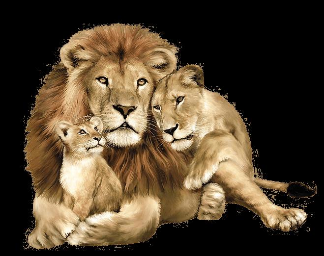 lion-11
